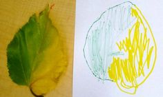 Observation Leaf Drawings
