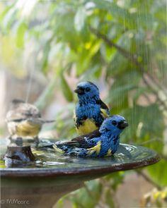 In the birdbath.