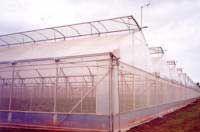 INVERNADEROS Tipos, clima, luz, temperatura, calefacción, ventilación, humedad, cultivo...