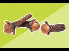 Зачем жевать СУШЁНУЮ ГВОЗДИКУ? Лечебные свойства гвоздики впечатляют! - YouTube