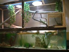 Chinese Water Dragon Cages | And this is what I used to use to raise hatchlings