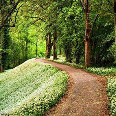 Romantico camino de sueños