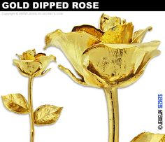 Real Roses Dipped In Gold gold dipped 24k trim & lacquered roses ...