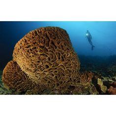 The Salvador Dali sponge with intricate swirling surface pattern Indonesia Canvas Art - Steve JonesStocktrek Images (18 x 12)