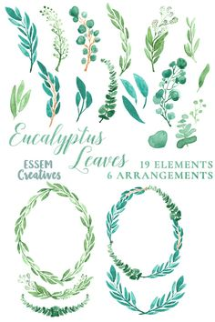 BUNDLE Watercolor Eucalyptus Leaves  by Essem Creatives on @creativemarket