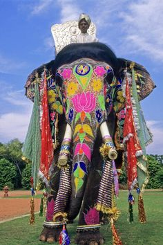 Decorated Indian Elephant Poster by Michele Burgess. All posters are professionally printed, packaged, and shipped within 3 - 4 business days. Elephant India, Elephant Love, African Elephant, Painted Indian Elephant, Painted Elephants, Baby Elephants, Rose Croix, Travel Photographie, Elephant Photography