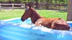 Whoa! Bet You've Never Seen This In Your Kiddie Pool (HILARIOUS!) - Youtube Music Videos http://countryrebel.com/blogs/videos/38576643-whoa-bet-youve-never-seen-this-in-your-kiddie-pool-hilarious