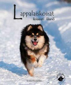Lappalaiskoirat Iloisesti Läsnä - Lapphund happily present