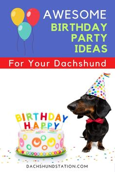 How Do You Plan a Birthday Party For A Puppy? Here are Some Simple and Fun ways to Celebrate Your Dachshund's Birthday include a puppy photo session, puppy birthday gifts, yummy pupcakes, and some puppy dog games. #dachshund |dachshund birthday party| Dog Birthday Gift, Puppy Birthday Parties, Puppy Party, Birthday Ideas, Dachshund Gifts, Dachshund Puppies, Dachshunds, Dog Games, Pet Dogs