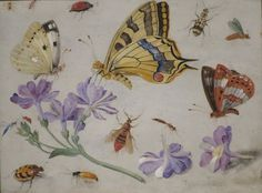 Butterflies, Other Insects, and Flowers' by Jan van Kessel, 1659, High Museum of Art.