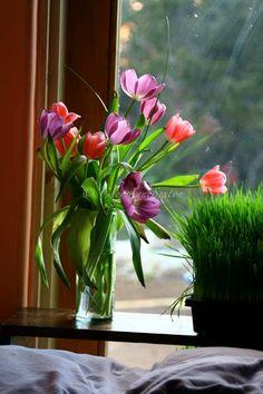 Treasury › home is wherever mom is.... by Amanda Sagarin ~~TREASURY ~~ Spring Tulips of Purple and Pink  photograph by CheyAnneSexton ~~ https://www.etsy.com/treasury/MTQyODI4NjN8MjcyNDM4NzExMA/home-is-wherever-mom-is