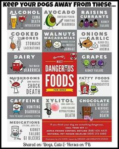 Most dangerous foods for dogs