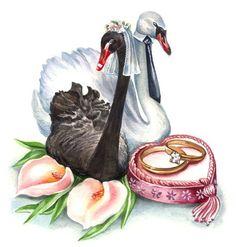 Одноклассники Wedding Card Design, Wedding Art, Wedding Album, Wedding Images, Wedding Pictures, Wedding Illustration, Illustration Art, Swan Painting, Wedding Shower Cards