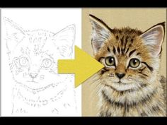 How To Draw a Kitten - Free Art Course - Pastel Pencils - YouTube