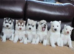 Your puppy printer seems to be running out of ink