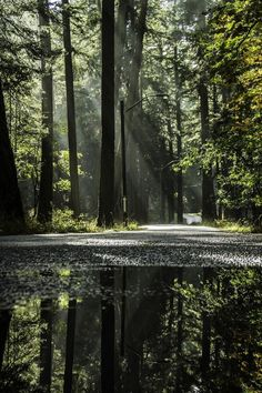 Forest Reflections - Photo by Doug Clement Beautiful Forest, Beautiful World, Beautiful Images, Forest Photography, Landscape Photography, Photography Tips, Nature Scenes, Amazing Nature, Belle Photo