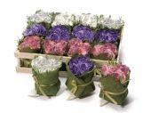 Bouquet/Centrotavola di rose - Set da 12