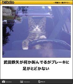 Car Cat, Geek Games, Delete Image, Image Title, Media Images, Nerd Geek, Image Sharing, I Love Cats, Cat Lovers