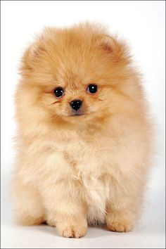 If I was gonna get a puppy, this would be it! Precious!
