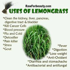 Uses & Health Benefits of Lemongrass