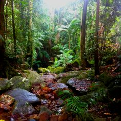 Rainforest while climbing Mt. Warning, Queensland, Australia