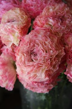 Ranunculus 'Vigor Pink'.  For some reason, I'm not fond of Ranunculus but this one is very pretty.