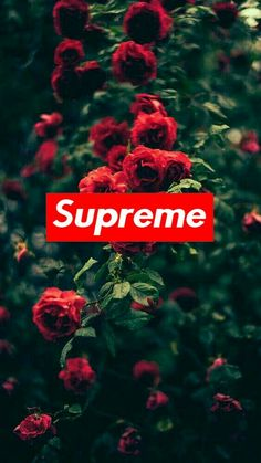 Supreme roses wallpaper by Trippie_future - ad - Free on ZEDGE™ Hype Wallpaper, Cute Wallpaper For Phone, Cute Wallpaper Backgrounds, Aesthetic Iphone Wallpaper, Wallpaper Quotes, Cute Wallpapers, Aesthetic Wallpapers, Cool Backgrounds For Iphone, Supreme Wallpaper Iphone 6