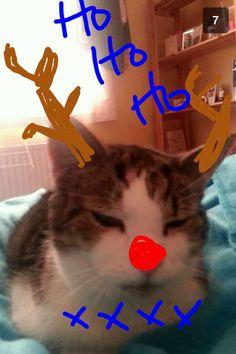 Roland the Reindeer