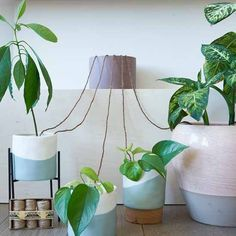 How to Have Your Houseplants Water Themselves When You're Away I was recently asked what I do with my indoor plants when I go on annual leave. Since most of them are from the tropical type and require constant moisture, long periods without water can b Hanging Plants, Potted Plants, Indoor Plants, Porch Plants, Hydroponic Gardening, Hydroponics, Indoor Gardening, Urban Gardening, Urban Farming