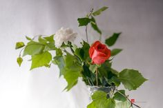 Celebration by Pavel Voronenko on Fine Art Photo, Photo Art, Celebration, Herbs, Nature, Plants, Photos, Naturaleza, Pictures