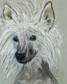 Chinese Crested Drawing - Crested Star by Cori Solomon
