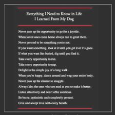Dogs know EVERYTHING!  ❤