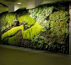 Vertical gardens by Mr. Green