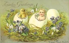 Charming Easter fantasy postcard of a newly hatched baby emerging from an egg shell at the same time a yellow chick does.  Their nest is highlighted with crocus and violets.  Postmarked in 1907, and a desirable holiday collectible in excellent condition.