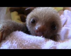 A adorable sloth orphanage