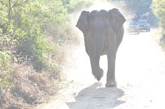 What do you do when an ‪#‎elephant‬ charges at you? ‪#‎CorbettNationalPark‬  Image: Syed Ali Husain