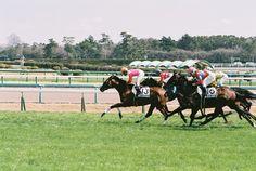 2014.03.23 Nakayama Race Course  photo by teitania