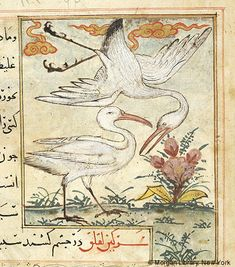Bestiary, MS M.500 fol. 62r - Images from Medieval and Renaissance Manuscripts - The Morgan Library & Museum