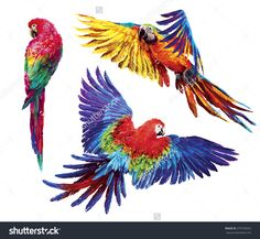 Colorful Parrots. Beautiful Macaw Stok Fotoğrafı 270792032 : Shutterstock Parrot Image, Best Camera For Photography, America Images, Garden Mural, African Art Paintings, Colorful Parrots, Bird Artwork, Button Art, Mixed Media Canvas