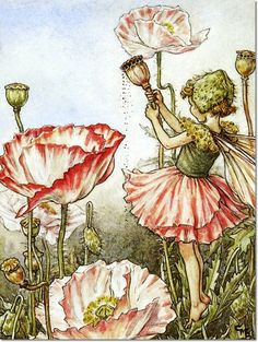 Cicely Mary Barker - Flower Fairies of the Garden - The Shirley Poppy Fairy Painting
