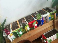 Recycled juice boxes turned into herbs garden