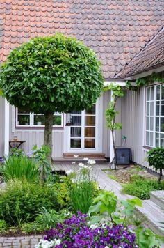 LILJOR OCH TULPANER: Trädgård