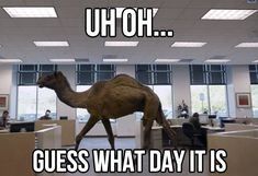 Guess what day it is?!  HUMP DAAY!