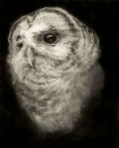 marko velk /charcoal/drawing /black and white/fusain/dessin/papier/noir et blanc Most Beautiful Animals, Beautiful Creatures, Owl Bird, Pet Birds, Creature Feature, Woodland Creatures, Gravure, Spirit Animal, Pet Portraits