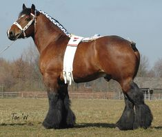 colorful pictures of draught horses | horsecolors.us