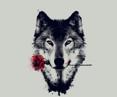 The rose wolf