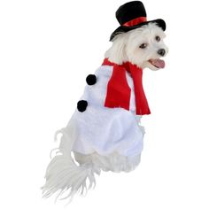 I pinned this Snowman Dog Costume from the Halloween Tricks & Treats event at Joss and Main!