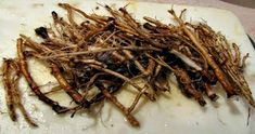 Recent studies have shown that dandelion root extract can work very quickly on cancer cells. Within 48 hours of coming into contact with the extract, cancerous cells begin to disintegrate. The body happily replaces these with healthy new cells. Cancer Fighting Foods, Cancer Cure, Cancer Cells, Natural Cures, Natural Health, Natural Foods, Dandelion Root Tea, Medicinal Herbs, Health Fitness