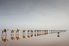Coming to Get Salt in the Danakil Depression in Ethiopia, by Jørgen Johanson