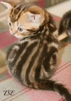 Bree Jr. Forgotten how adorable she was as a kitten!